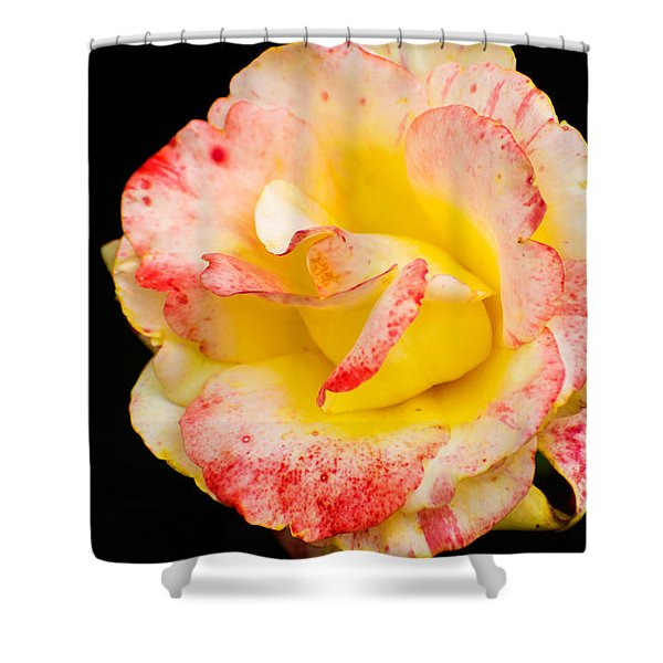 Chihuly Shower Curtain