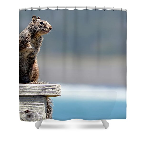 Chilly Squirrel Shower Curtain