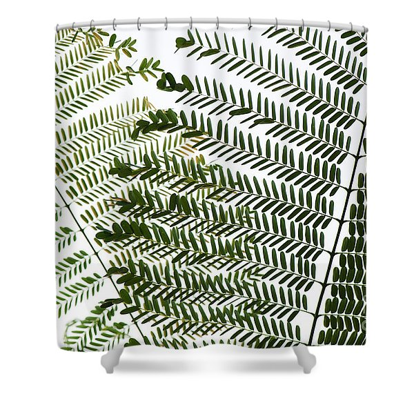 Chinese Albizia Leaves Shower Curtain