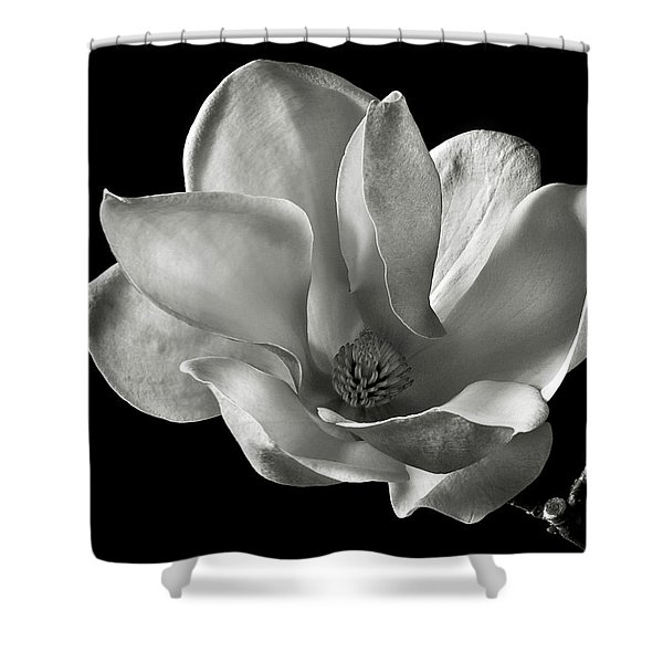 Chinese Magnolia Shower Curtain