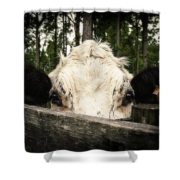 Chocolate Chip Saying Hello Shower Curtain