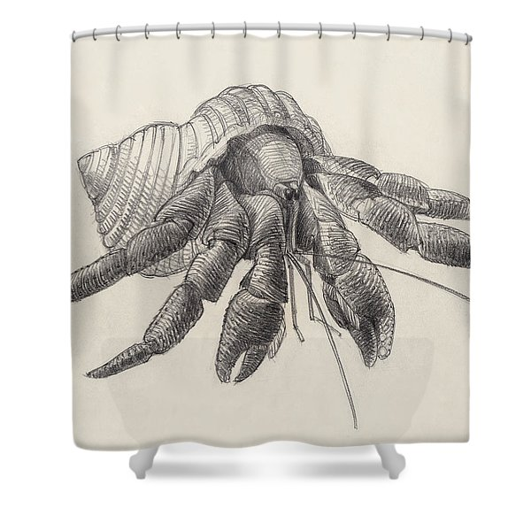 Chocolate Hermit Crab Shower Curtain