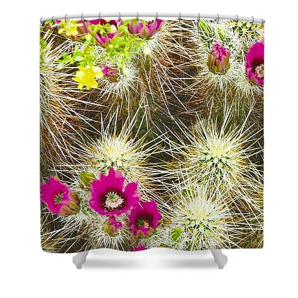Cholla Cactus Blooms Shower Curtain