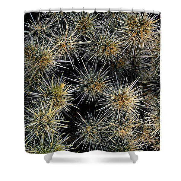 Cholla Cactus Cluster Shower Curtain