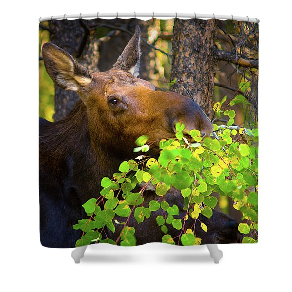 Shower Curtain featuring the photograph Chow Time by John De Bord