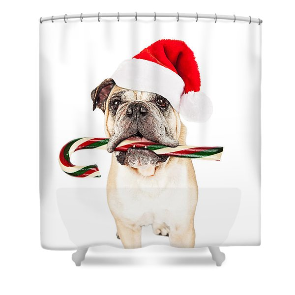 Christmas Bulldog Eating Candy Cane Shower Curtain