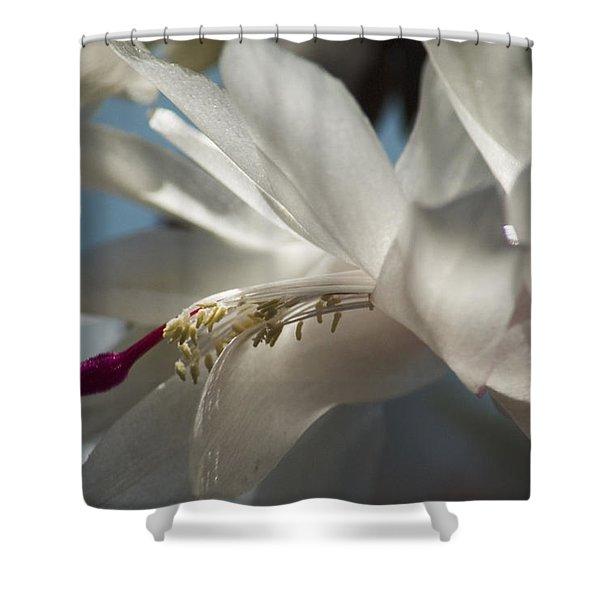 Christmas Cactus Blossom Shower Curtain