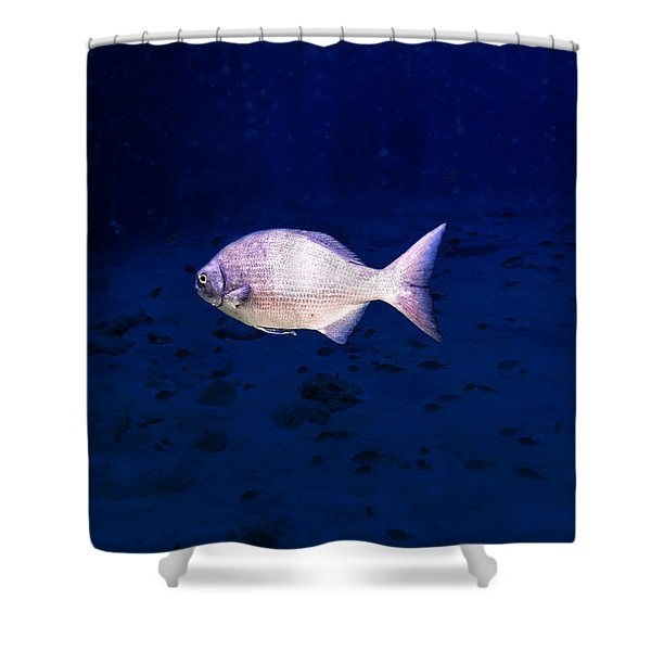 Shower Curtain featuring the photograph Chub by Perla Copernik