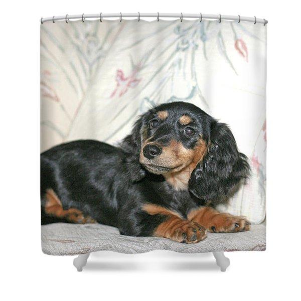 Cinder Shower Curtain