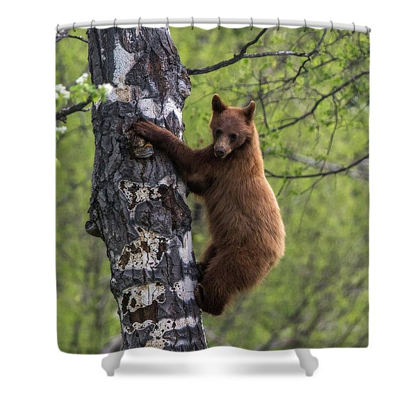 Cinnamon Climb Shower Curtain