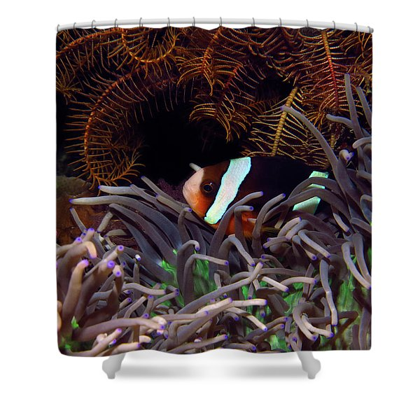 Clark's Anemonefish, Indonesia 2 Shower Curtain