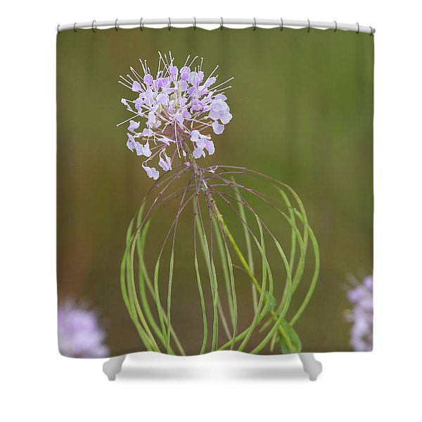 Clasping Warea Shower Curtain