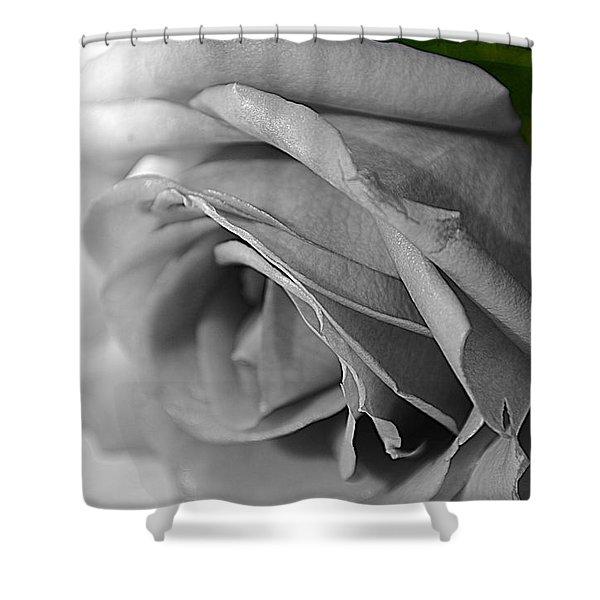 Classic White Rose Shower Curtain