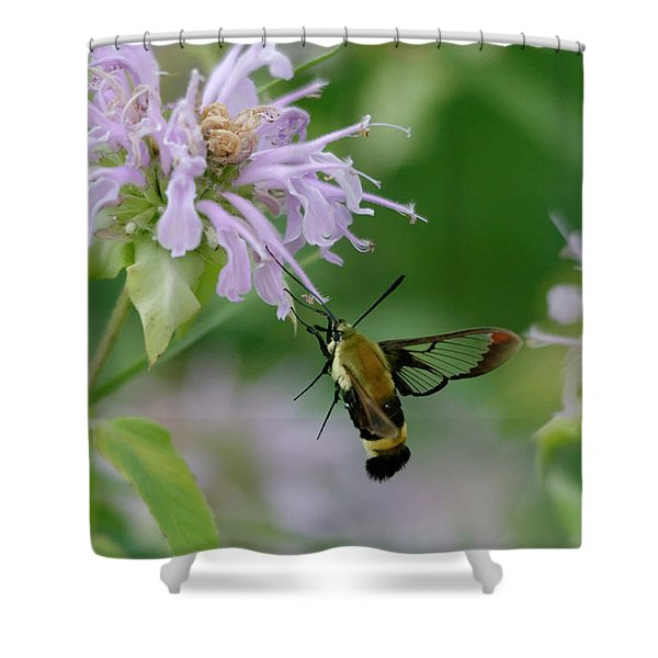 Clearwing Moth Shower Curtain