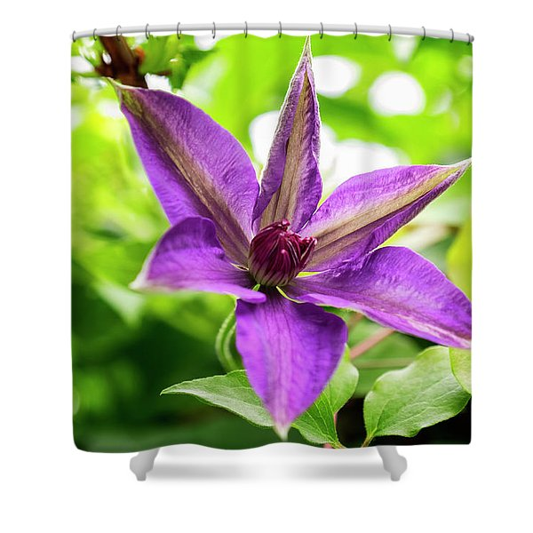 Shower Curtain featuring the photograph Clematis Vine II by Tom Singleton