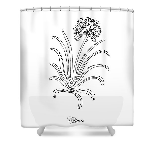 Clivia Flower Botanical Drawing Shower Curtain