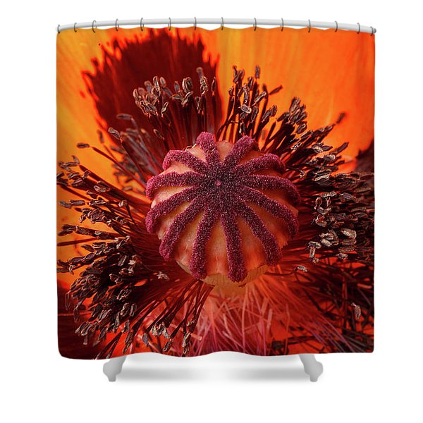 Close-up Bud Of A Red Poppy Flower Shower Curtain