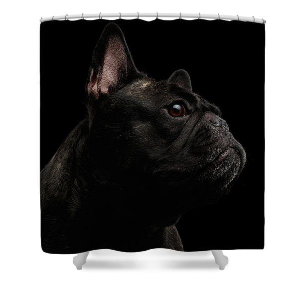 Shower Curtain featuring the photograph Close-up French Bulldog Dog Like Monster In Profile View Isolated by Sergey Taran