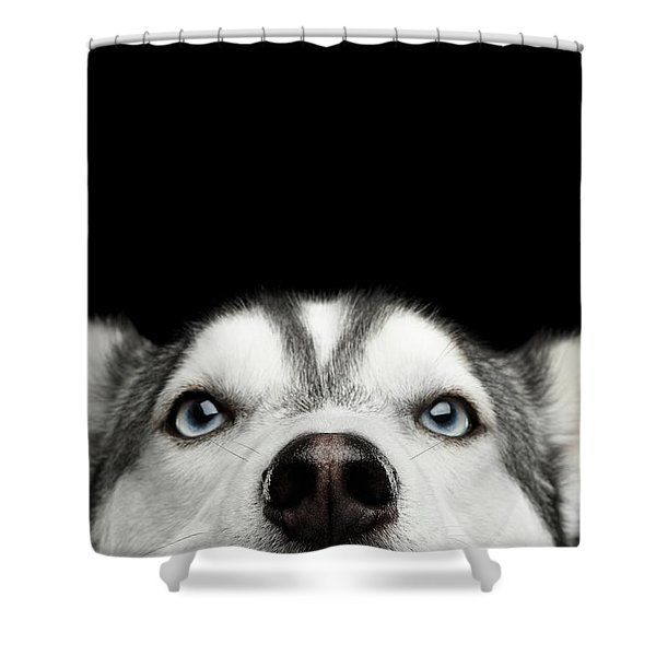 Close-up Head Of Peeking Siberian Husky Shower Curtain