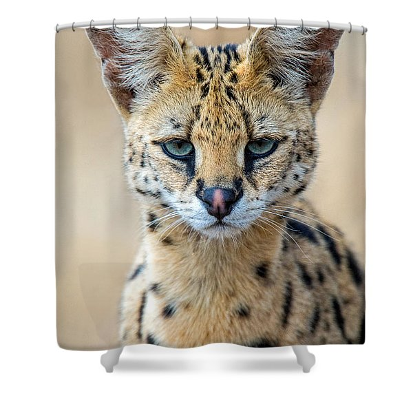 Close-up Of Serval Leptailurus Serval Shower Curtain