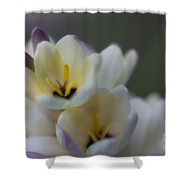 Close-up Of White Freesia Shower Curtain