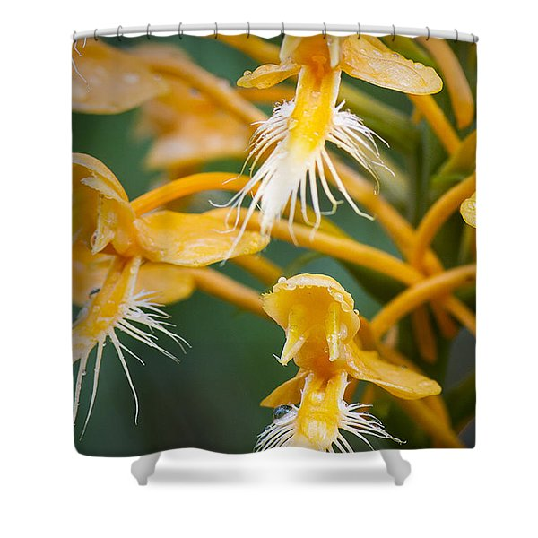Close-up Of Yellow Fringed Orchid Shower Curtain