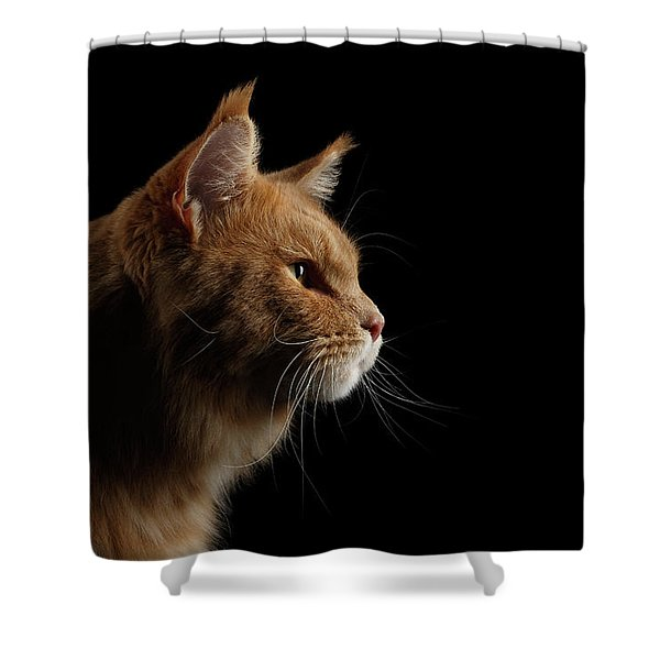 Close-up Portrait Ginger Maine Coon Cat Isolated On Black Background Shower Curtain