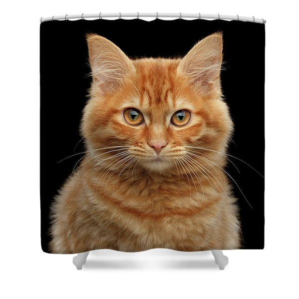 Close-up Portrait Of Ginger Kitty On Black Shower Curtain