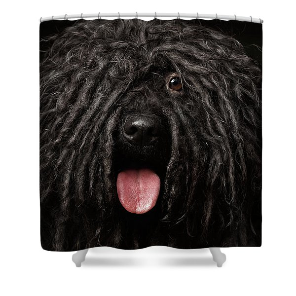 Close Up Portrait Of Puli Dog Isolated On Black Shower Curtain