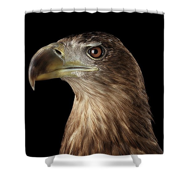 Close-up White-tailed Eagle, Birds Of Prey Isolated On Black Background Shower Curtain