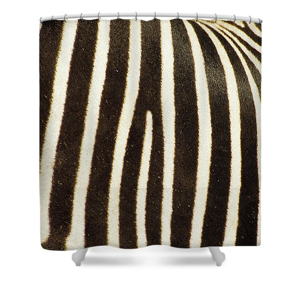Close View Of A Zebras Stripes Shower Curtain