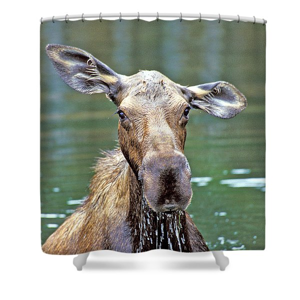 Close Wet Moose Shower Curtain