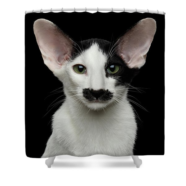 Shower Curtain featuring the photograph Closeup Funny Oriental Shorthair Looking At Camera Isolated, Bla by Sergey Taran