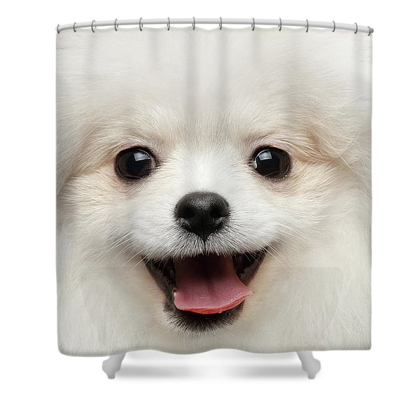 Closeup Furry Happiness White Pomeranian Spitz Dog Curious Smiling Shower Curtain