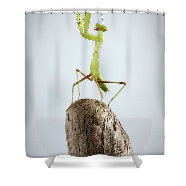 Closeup Green Praying Mantis On Stick Shower Curtain