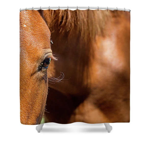 Closeup Horse Eye With Copy Space Shower Curtain