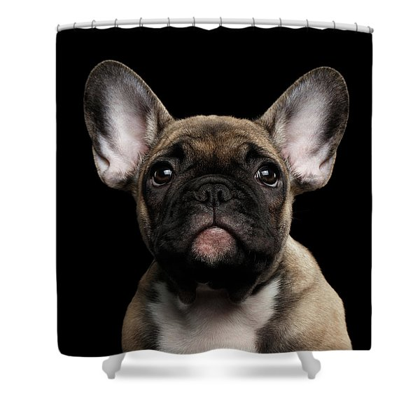 Closeup Portrait French Bulldog Puppy, Cute Looking In Camera Shower Curtain