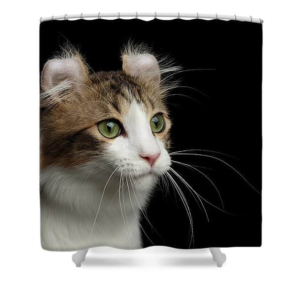 Closeup Portrait Of American Curl Cat On Black Isolated Background Shower Curtain