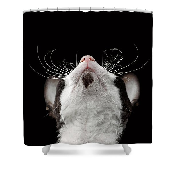 Closeup Portrait Of Cornish Rex Looking Up Isolated On Black  Shower Curtain