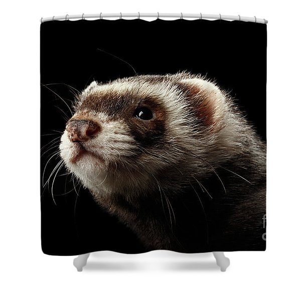 Closeup Portrait Of Funny Ferret Looking At The Camera Isolated On Black Background, Front View Shower Curtain