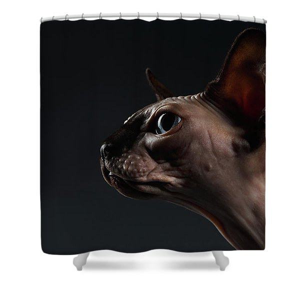 Closeup Portrait Of Sphynx Cat In Profile View On Black  Shower Curtain