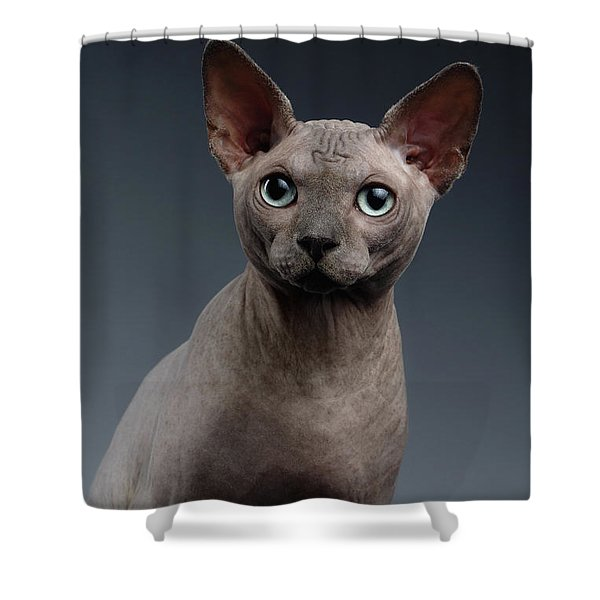 Closeup Portrait Of Sphynx Cat Looking In Camera On Dark  Shower Curtain