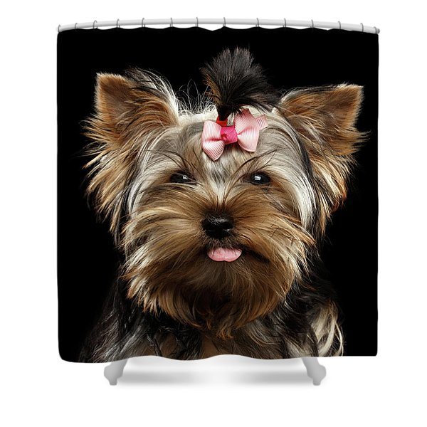 Closeup Portrait Of Yorkshire Terrier Dog On Black Background Shower Curtain