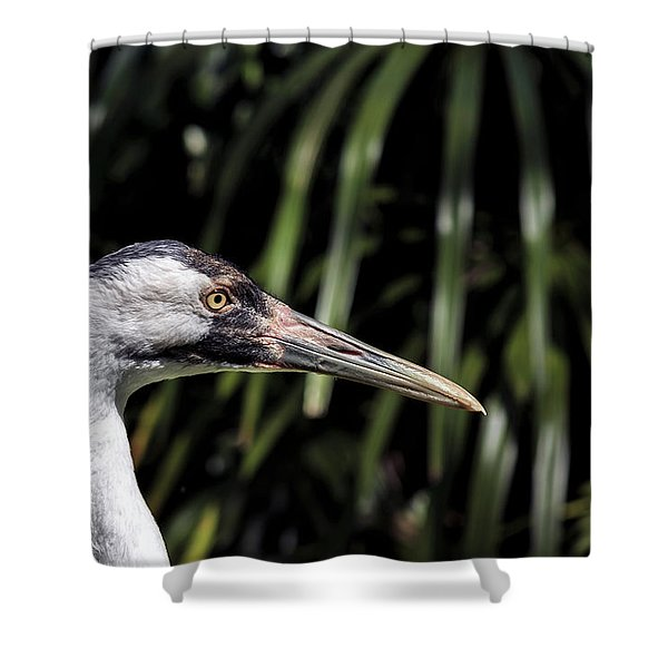 Closeup Side View Of A Young Adult Whooping Crane Shower Curtain