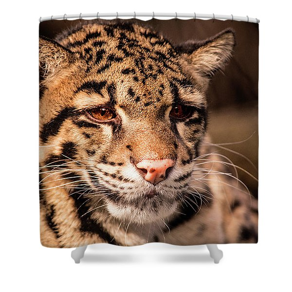 Clouded Leopard II Shower Curtain