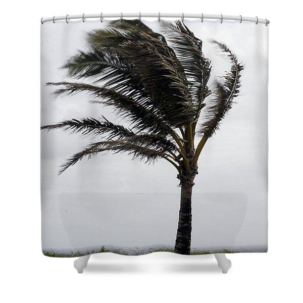 Coastal Winds Shower Curtain