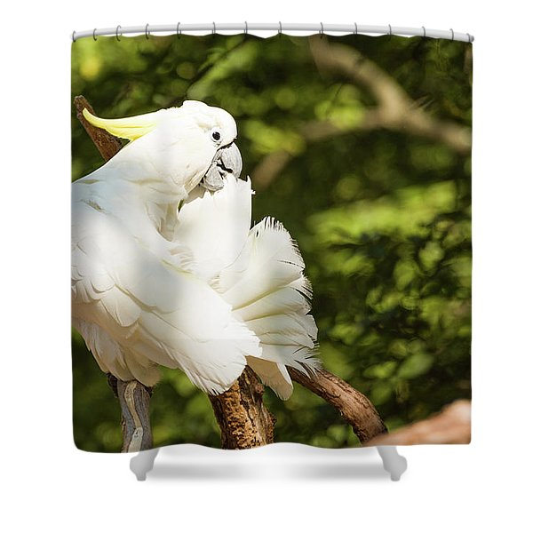 Cockatoo Preaning Shower Curtain