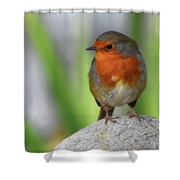 Cocky Robin Shower Curtain
