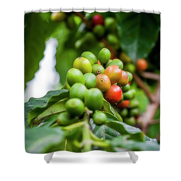 Coffee Plant Shower Curtain
