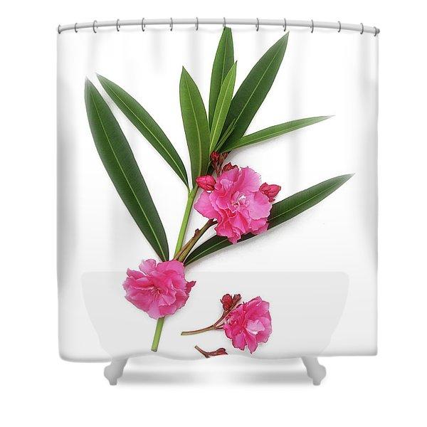 Cog  Nerium Oleander Splendens Giganteum Shower Curtain